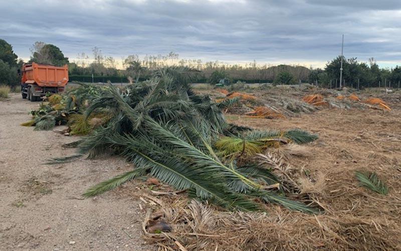 Campo materiales leñosos fibrosos restos palmeras